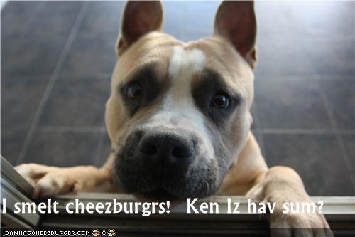 Cheezburger Image 4470131712
