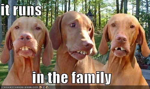animals critters dogs runs in the family teeth - 4470236672