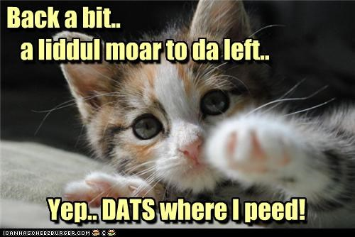 accident,back,bit,caption,captioned,cat,kitten,left,little,little more,more,spot,that,yep