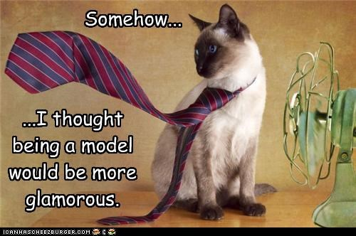 caption captioned cat disappointed glamorous model modeling more siamese tie - 4470730496