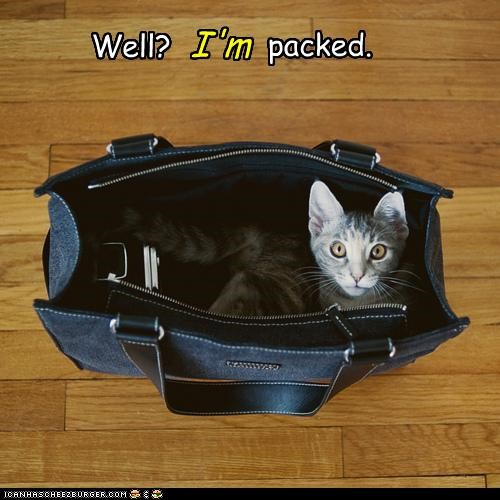bag,caption,captioned,cat,packed,personally,sitting,waiting,well