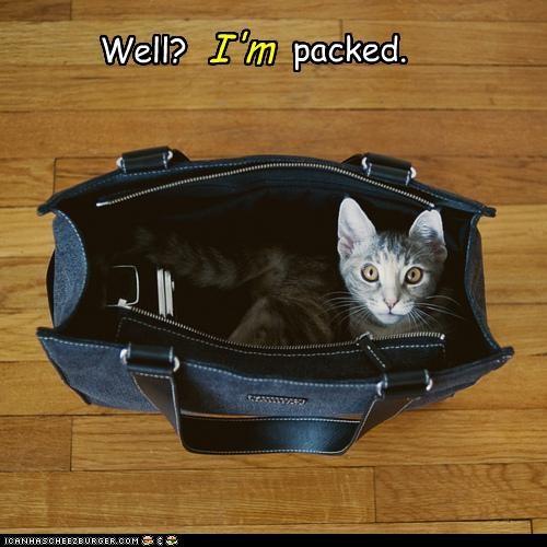 bag caption captioned cat sitting waiting well - 4470744320