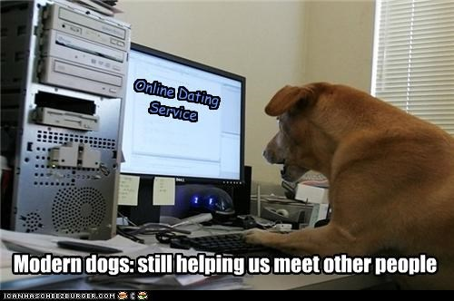 Online Dating Service Modern dogs: still helping us meet other people