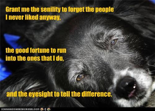 adage,begging,border collie,eyesight,friends,friendship,grant,Hall of Fame,old,request,sarcastic,senility,tongue in cheek