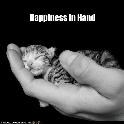 caption captioned cat Hall of Fame hand happiness holding kitten sleeping tiny - 4471467776