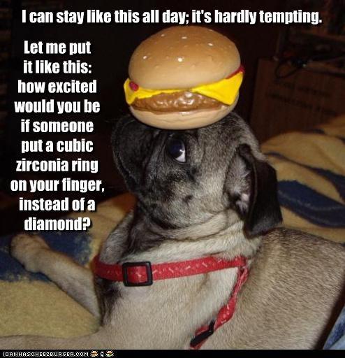 Cheezburger Image 4471600384