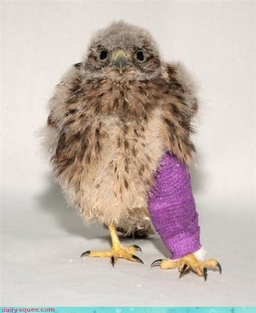bird borked broken cast cuddle cuddling do want i has injury leg please recovering request squee - 4471898880