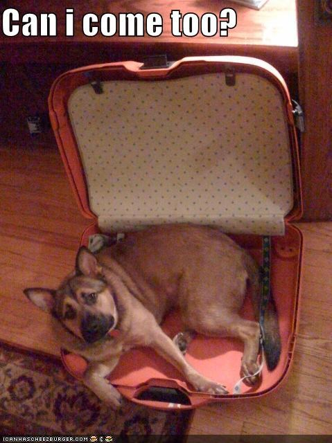 asking,come,do want,german shepherd,permission,please,question,suitcase,too,vacation