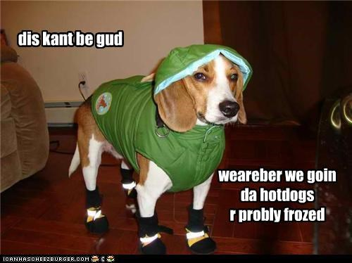 afraid,beagle,boots,coat,cold,destination,dressed up,frozen,hotdogs,not good,worried