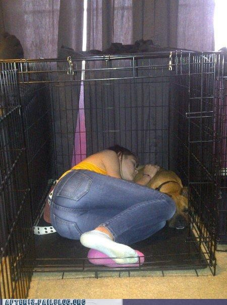 cage dogs drunk kennel passed out - 4472495616