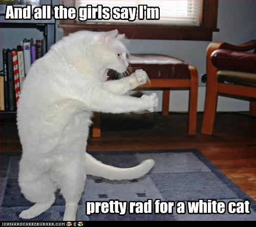 caption,captioned,cat,dancing,fly,lyric,offspring,parody,pretty fly for a white guy,rewrite,song,white