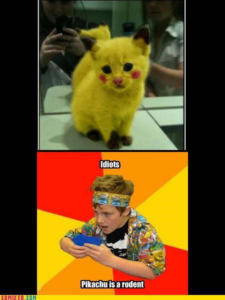 Cats idiots nerds pikachu Pokémon - 4472823040