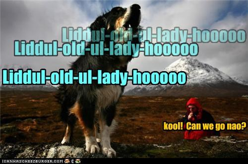 echo,echoing,greater swiss mountain dog,howling,mountains,yodel,yodeling