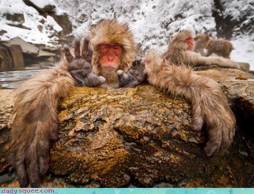 acting like animals angle arms divining extra four master monkey optical illusion pair second sensei snow snow monkey top trick wisdom wise zen - 4473267968