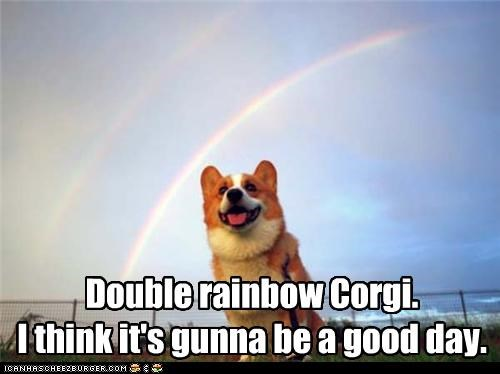 awesome,corgi,double rainbow,good day,happy dog,rainbow,rainbows,smile,smiles,smiling