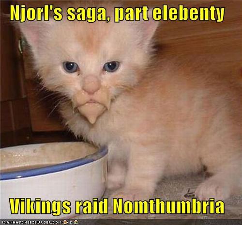 beard caption captioned cat elebenty kitten lolwut noms part tabby vikings wtf - 4473815808