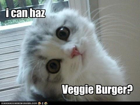 Cheezburger Image 4473936384