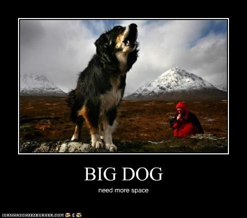BIG DOG need more space