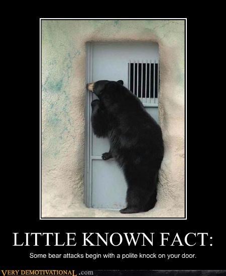 bear cage knock polite - 4474597376