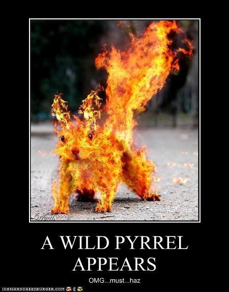 A WILD PYRREL APPEARS OMG...must...haz