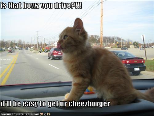 Cheezburger Image 4475102976