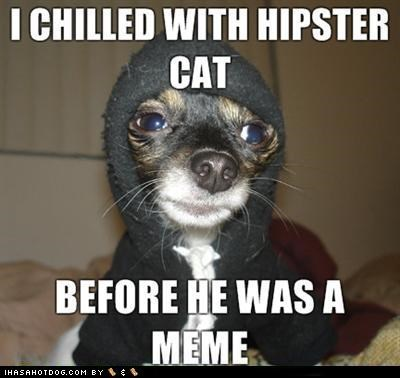 chihuahua chilled costume dressed up hanging out hip hipster hipster cat hoodie meme memebase memedogs pretension pretentious - 4475321856