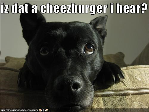 Cheezburger Image 4475934464