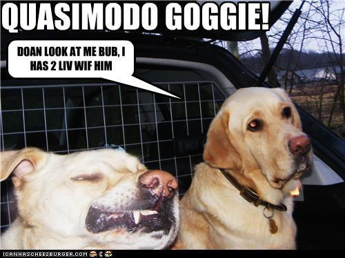 QUASIMODO GOGGIE! DOAN LOOK AT ME BUB, I HAS 2 LIV WIF HIM