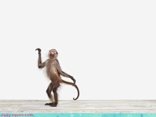 acting like animals backdrop beyoncé choreography dancing imitation Lotus Flower monkey music video parody radiohead routine single ladies Thom Yorke white - 4476723968
