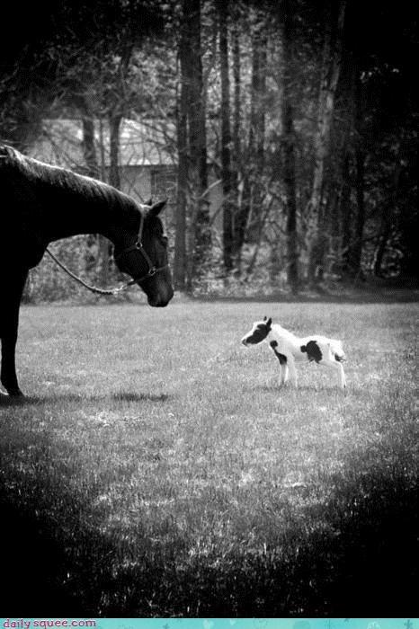 baby born einstein ever horse smallest tiny - 4476728832