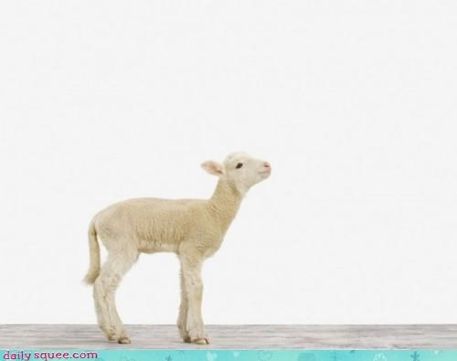 art beautiful critique lamb minimal minimalism minimalist simple squee subtle - 4476729344