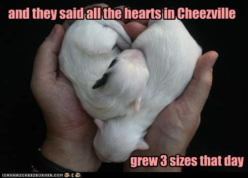 and they said all the hearts in Cheezville grew 3 sizes that day