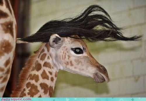 acting like animals baby content excited giraffes hair haircut hairdo happy love pleased style stylist