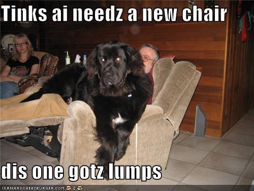 Cheezburger Image 4476797440