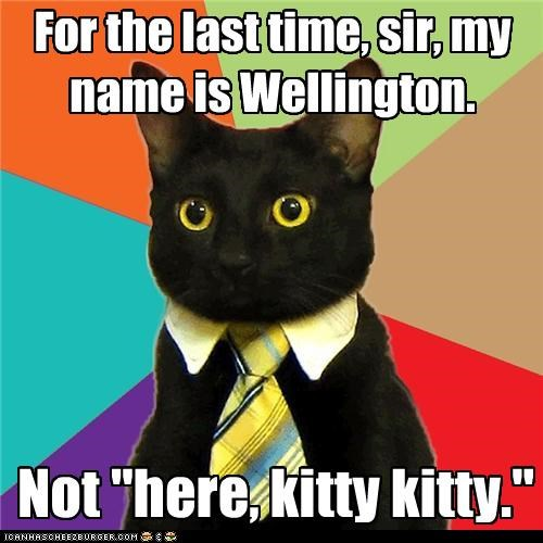 Business Cat,here kitty kitty,Wellington