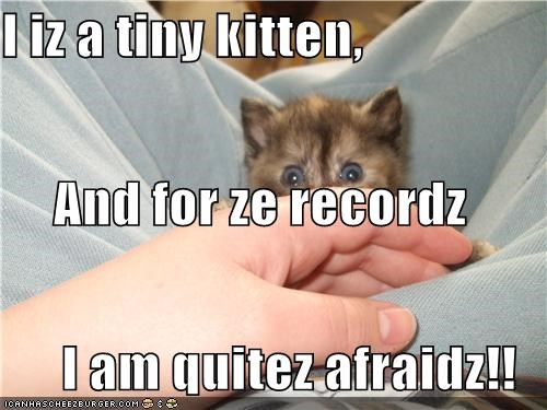 I iz a tiny kitten, And for ze recordz I am quitez afraidz!!