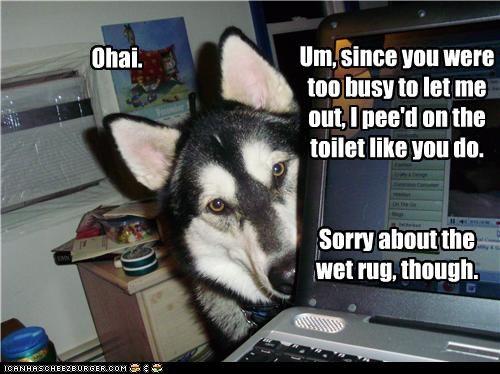 accident bathroom busy FAIL husky rug sorry toilet wet - 4477760768