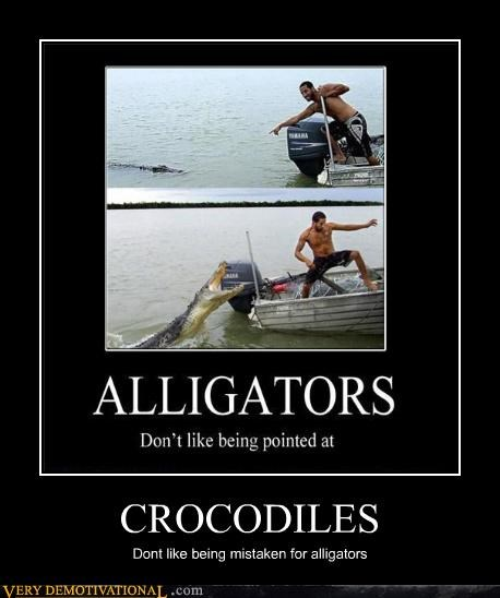 crocodile alligator bad idea boat