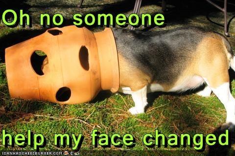 Cheezburger Image 4477900032