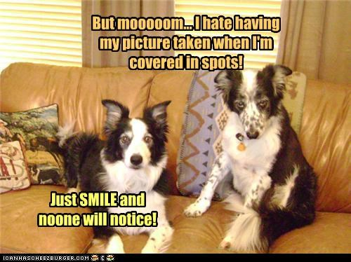 advice,border collie,border collies,covered,dislike,do not want,embarrassed,hate,picture,posing,reassurance,reassuring,shame,smile,spots