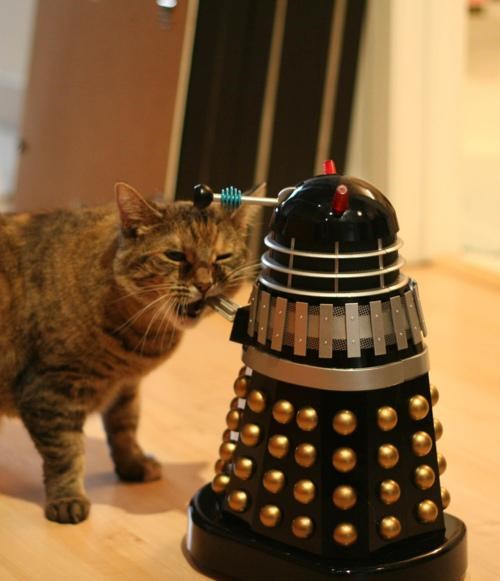 Caturday,dalek,doctor who,Exterminate