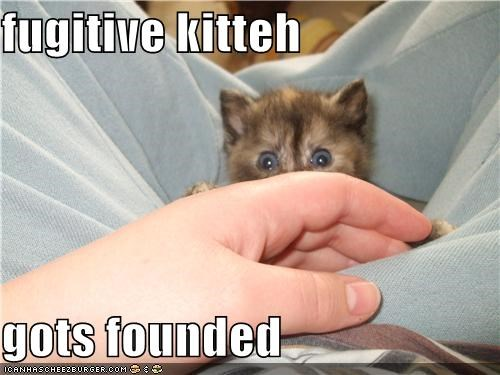 fugitive kitteh  gots founded