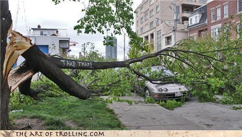 fall IRL take that tree - 4478265344