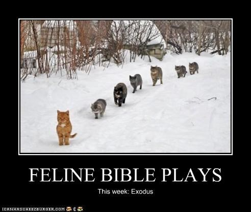 FELINE BIBLE PLAYS This week: Exodus