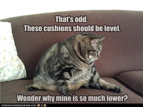 caption captioned cat confused cushions difference ignorance level odd should wonder wondering - 4478695168