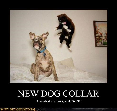 dog collar cat wtf repel - 4478724608