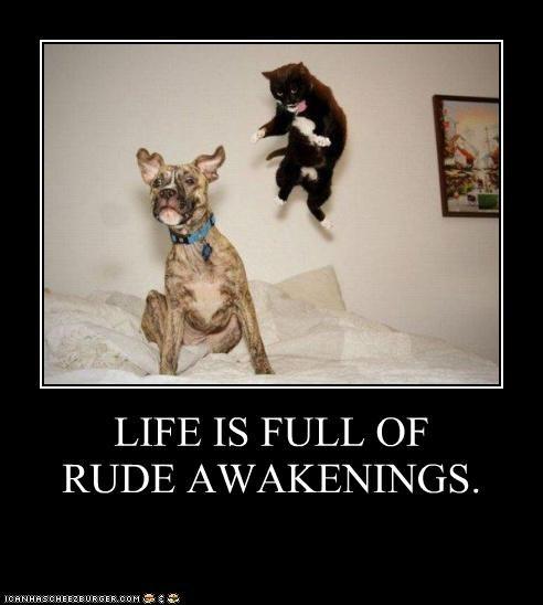 LIFE IS FULL OF RUDE AWAKENINGS.