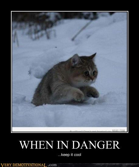 cat wtf danger cute - 4479091968