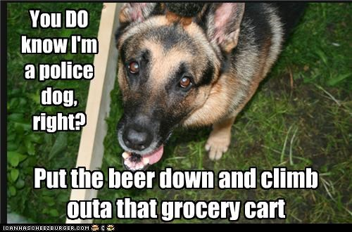 beer,climb,Command,german shepherd,grocery cart,instructions,order,police,police dog,put down,question