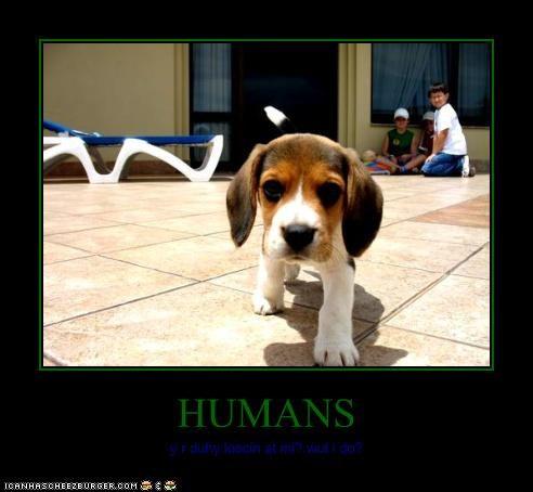 HUMANS y r duhy loocin at mi? wut i do?